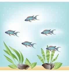 Five blue fish vector