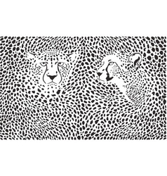 cheetahs background with heads vector image vector image