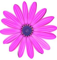 A pink flower vector
