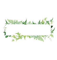 fresh natural greenery leaves branches jasmine vector image