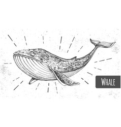 realistic whale on grunge background vector image