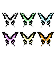 Six butterflies with black wings and motley vector