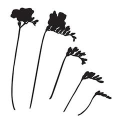 freesia silhouettes vector image