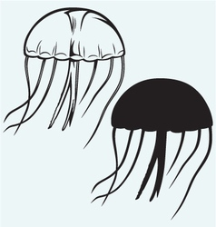 Jellyfish vector image vector image