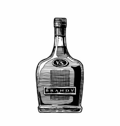 Bottle brandy vector