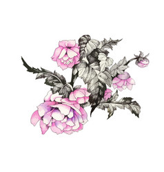 hand drawn pink flower isolated on white vector image