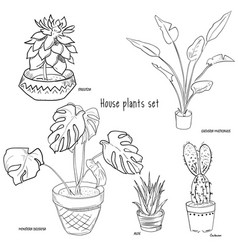 Houseplants set of hand drawing vector