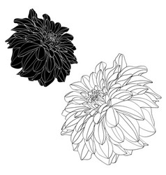 sketch floral botany collection vector image