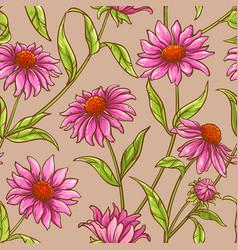 echinacea purpurea pattern vector image