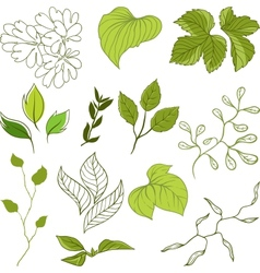 Set of different leaves A vector image