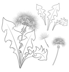 Set of images with a dandelion vector
