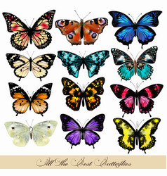 Set realistic butterflies for design vector