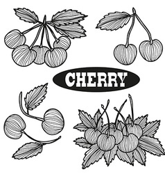 hand drawn cherry fruits vector image vector image