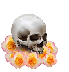 Skull on roses vector image vector image