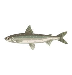 Coregonus albula vendance cisco fish vector