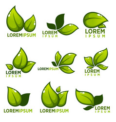 Glossy leaves and plants empblems icons and vector