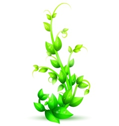 Green Branch of Plant vector