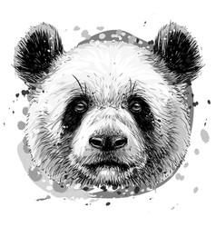 panda graphic monochrome hand-drawn portrait vector image