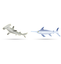 sword fish and hammer shark vector image