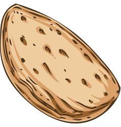 Unshelled almond vector