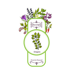 Vintage herbs and spices label collection oregano vector