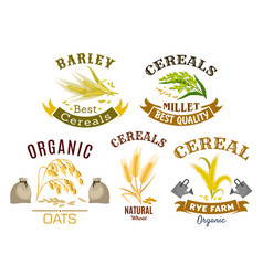 cereal icon set with wheat rye oat and millet vector image