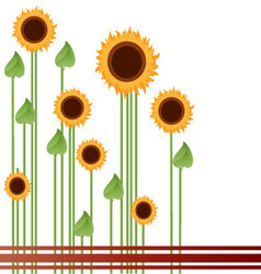sunflowers-in-a-field vector image vector image
