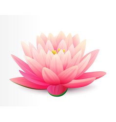 Beautiful realistic pink lotus flower isolated vector