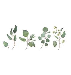 Eucalyptus seeded silver dollar tree leaves vector