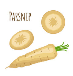 fresh parsnip vegetable organic vegetarian food vector image