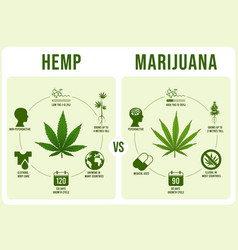 Hemp vs marijuana infographics cannabis leaf low vector