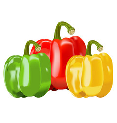 capsicum vegetables bell pepper vector image