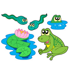 frog collection vector image