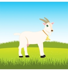 Nanny goat on field vector image