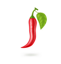 Realistic red hot natural chili pepper isolated vector