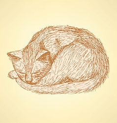 Sketch sleeping cat t in vintage style vector