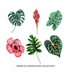 Various isolated watercolor foliage on white vector