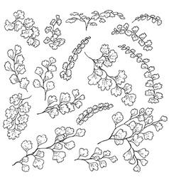 doodle fern vector image