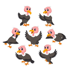 collection of the beautiful baby vulture vector image