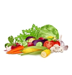 Fresh vegetables on white vector image