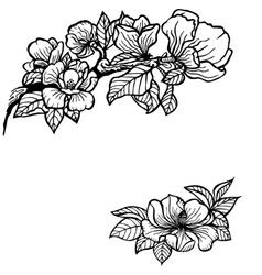Magnolia vector