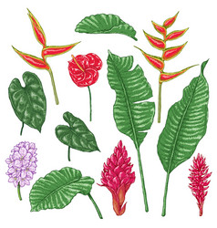 Tropic flowers sketch vector