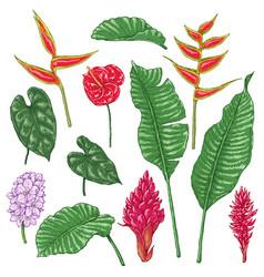 tropic flowers sketch vector image
