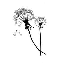 Two black dandelions vector