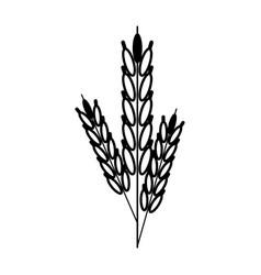 Wheat ears icon image vector