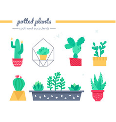 cacti and succulents collection - set vector image