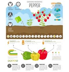 Gardening work farming infographicsweet pepper vector