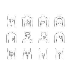 Healthy human organs linear icons set throat vector