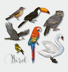 bird collection set vector image