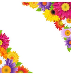 Colorful Gerbers Flowers Border vector image